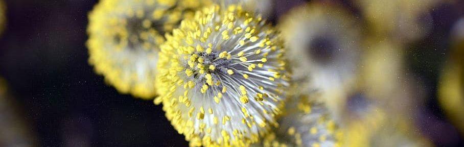 Alergia y otitis